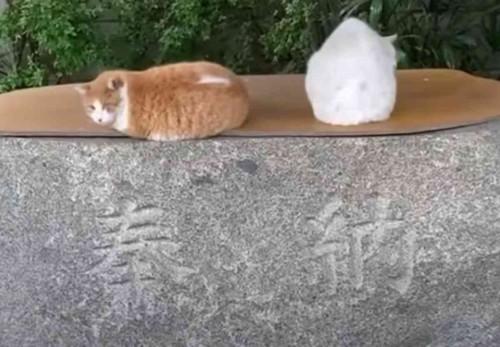 ボス猫たち