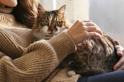 飼い主の上で寛ぐ猫
