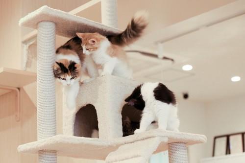 白系のキャットタワーに乗る猫達