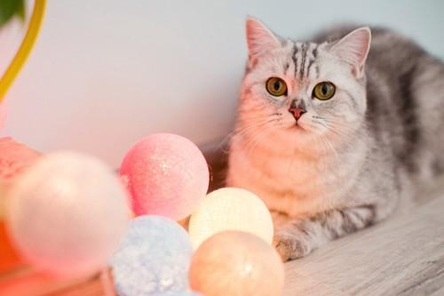 光る玉と猫
