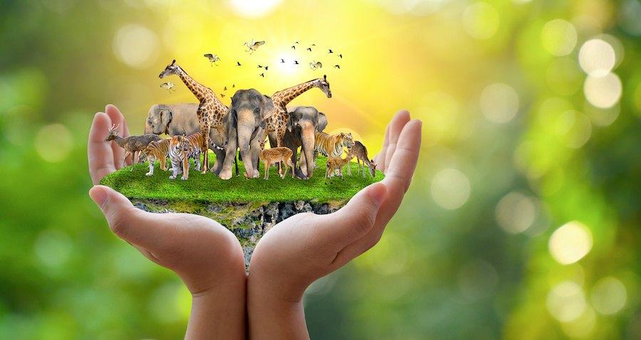 様々な動物たちを人の手で支えるイメージ