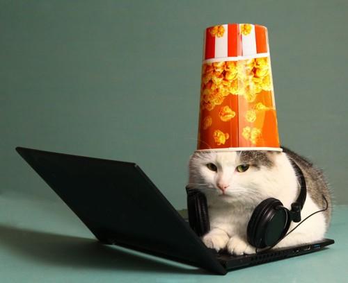 ポップコーンの箱を被る猫