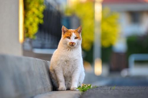 道路の端で座っている猫