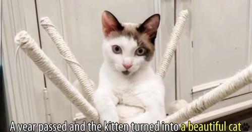 キャットタワーの上に猫