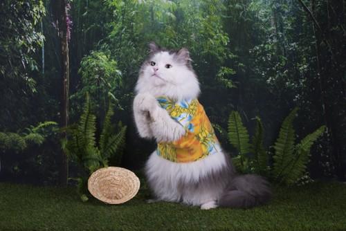 お願いポーズの猫