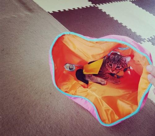 おもちゃの中に猫