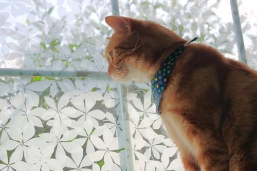 窓から見下ろす猫