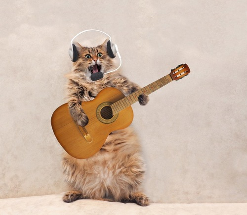 ギターを担いでイヤホンをする猫
