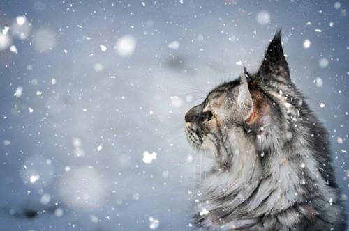 神秘的な雰囲気の猫