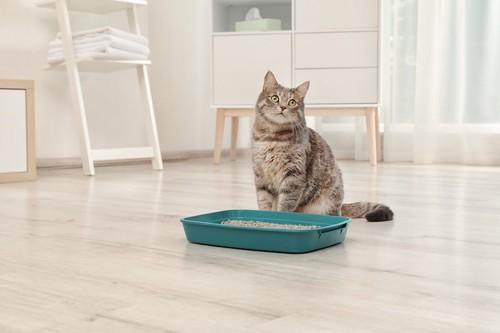 部屋に置かれた猫トイレの横に座る猫