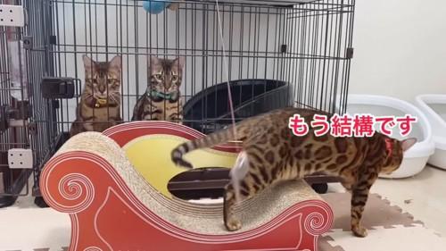 爪とぎから降りる猫