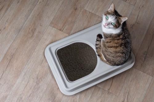 目隠しつきトイレの上に乗ってこちらを見つめる猫