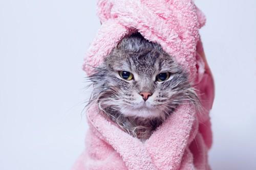 タオルを巻いた猫