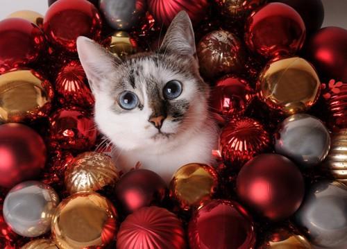 クリスマスモニュメントと猫