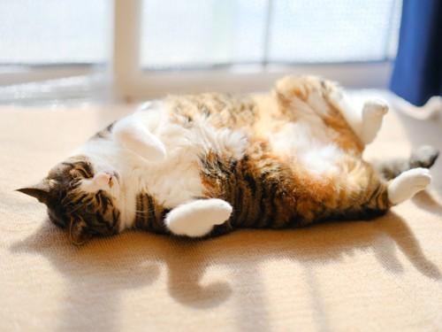 窓辺で仰向けに寝ている猫