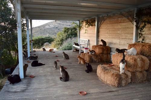 テラスで寛ぐ猫たち
