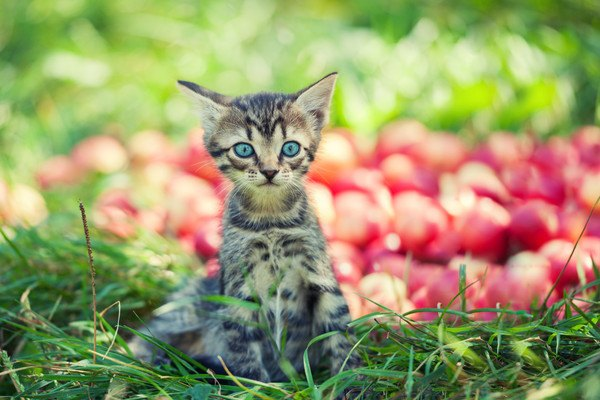 赤い実と子猫