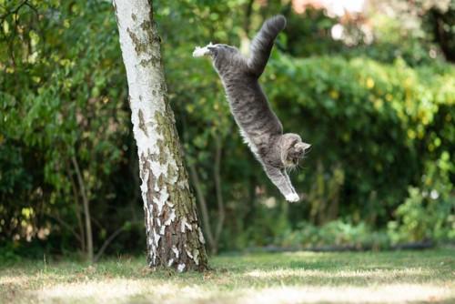 木から飛び降りる猫