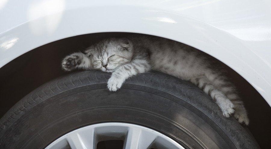 タイヤの上で眠る猫