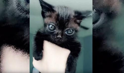 抱っこされる黒い子猫
