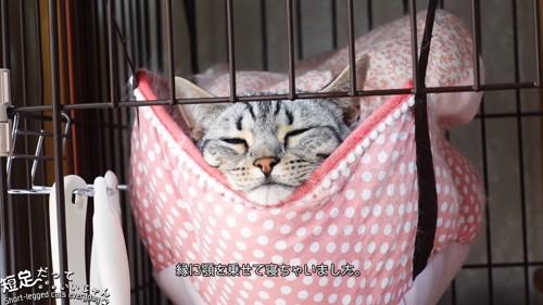 ハンモックに乗って顔を出す猫
