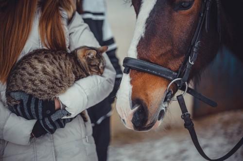猫を抱いた女性に寄り添う馬