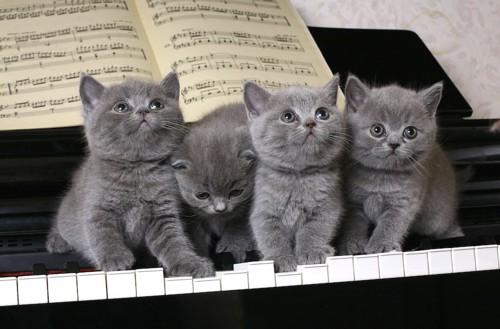 ピアノの鍵盤の上に並んだ4匹の子猫