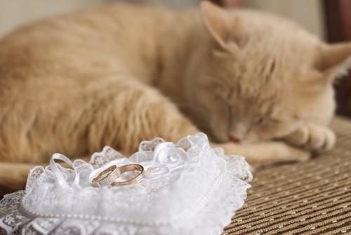 リングピローの上の指輪と眠る猫