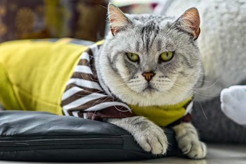 服を着て不満顔の猫