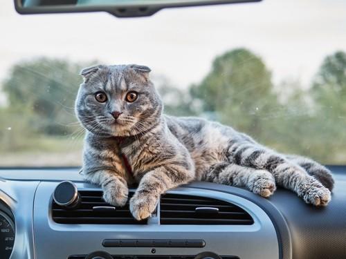 車のなかにいる猫