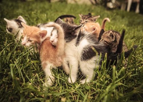 寄り添うたくさんの子猫たち