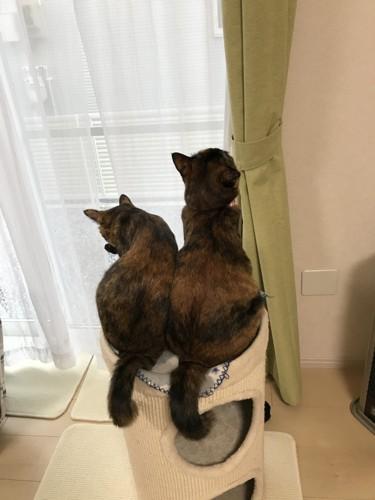 キャットタワーの上で背中を向ける2匹の猫