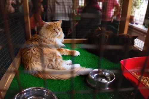 ケージの中で満足そうに過ごす猫