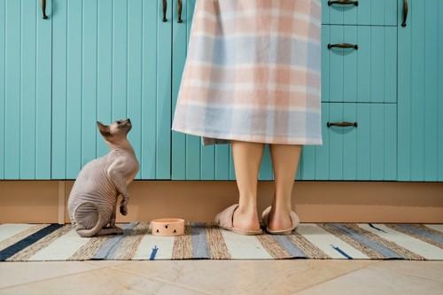 キッチンで女性を見上げる猫