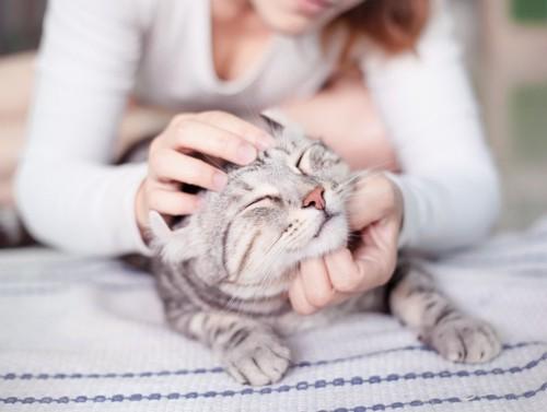 女性にマッサージされる猫