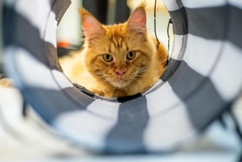 トンネルの向こうの猫