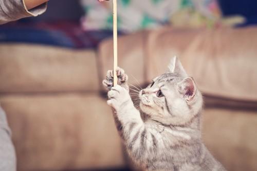 棒を触る猫
