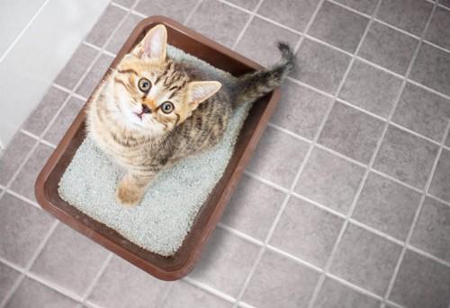 猫砂の上の猫の足