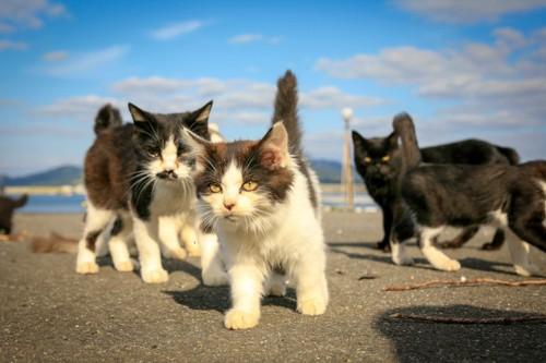 たくさんの子猫たち