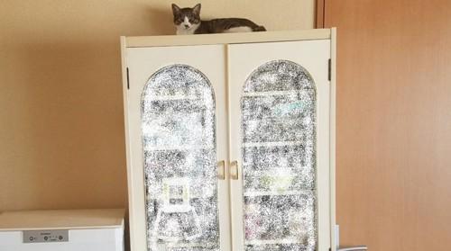 食器棚の上でくつろぐ猫