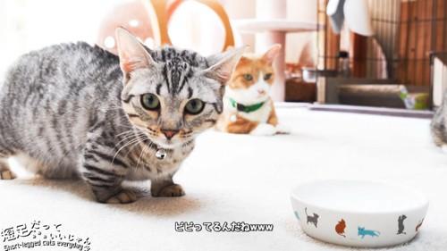 カメラを見る子猫