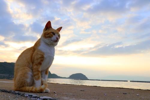 朝日を浴びて座る猫