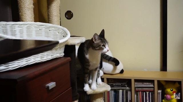 ポーカーフェイスな猫