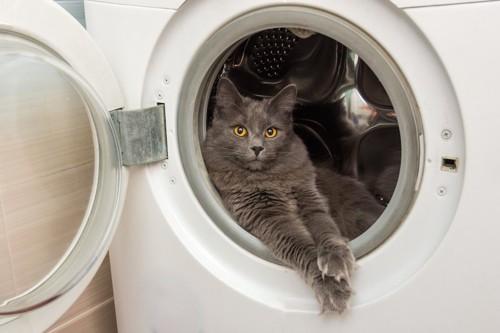 洗濯機の中に入ってくつろぐ猫