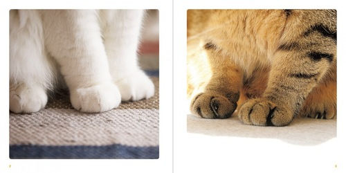 ねこのおてて写真集の猫の手