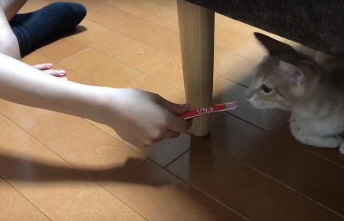 ちゅーるの匂いを嗅ぐ猫