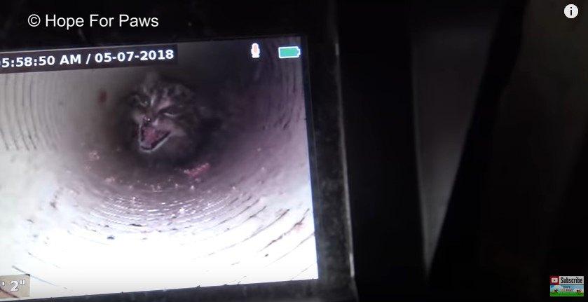 パイプの底で鳴く子猫(モニタ―画面)