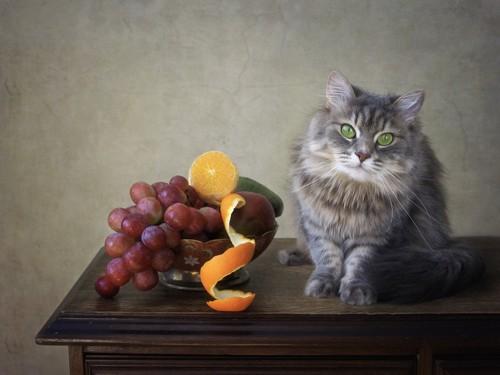フルーツと猫