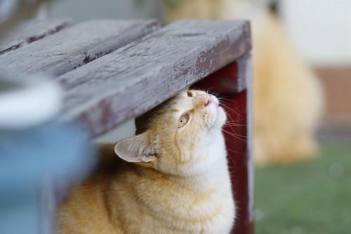 頭を擦り付ける猫