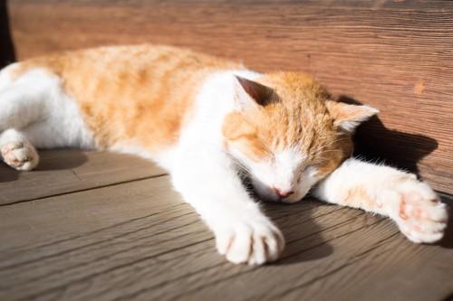 ベンチで日向ぼっこする猫